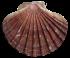 shell-2479831_960_720